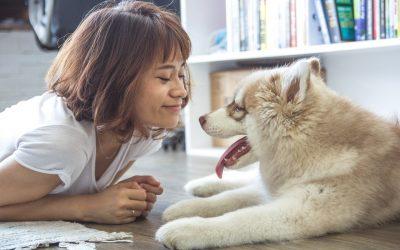 El perro es, sin duda, el mejor amigo del hombre