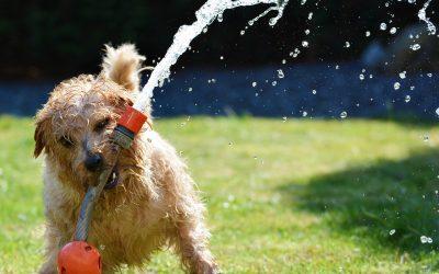 5 inventos para que tu perro esté fresquito en verano
